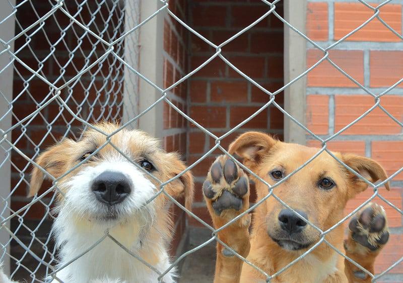 En la semana castraron un total de 238 animales