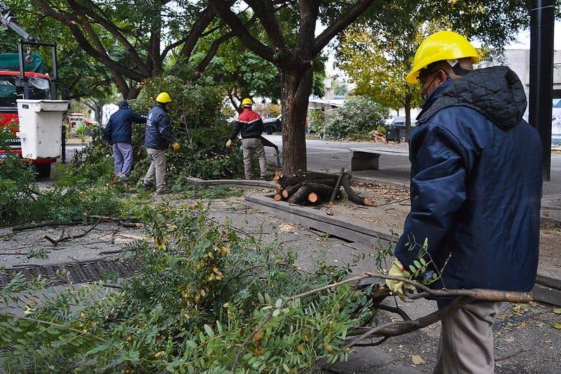 Vivero Municipal: avanza el curso de poda