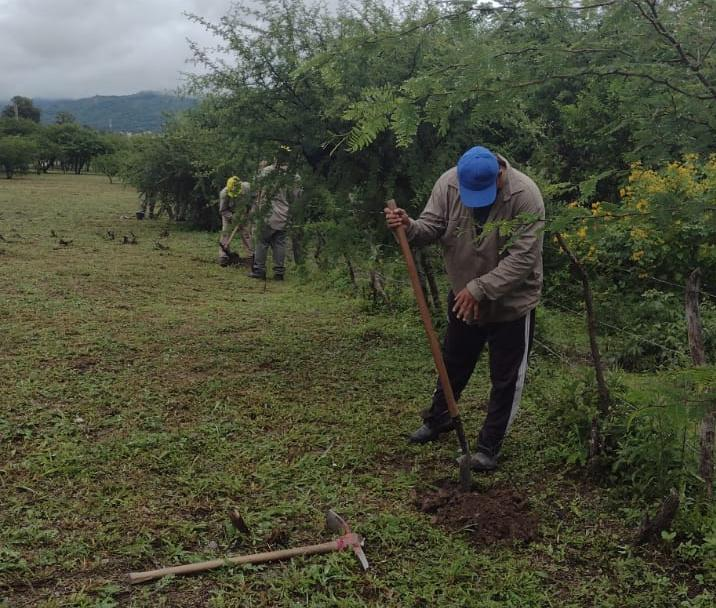 El municipio promueve la plantación de árboles
